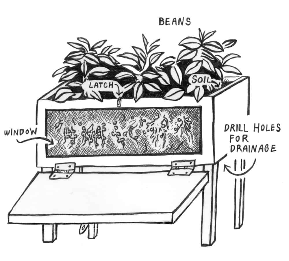 soil food web observation box
