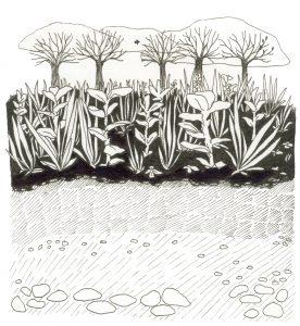 cover crop soil strata