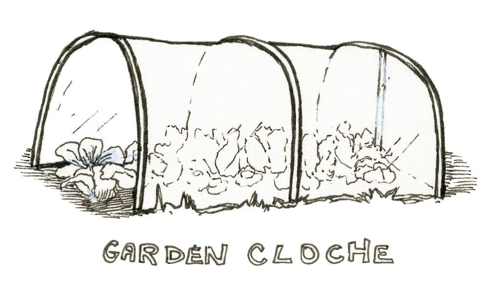 garden cloche cold frame