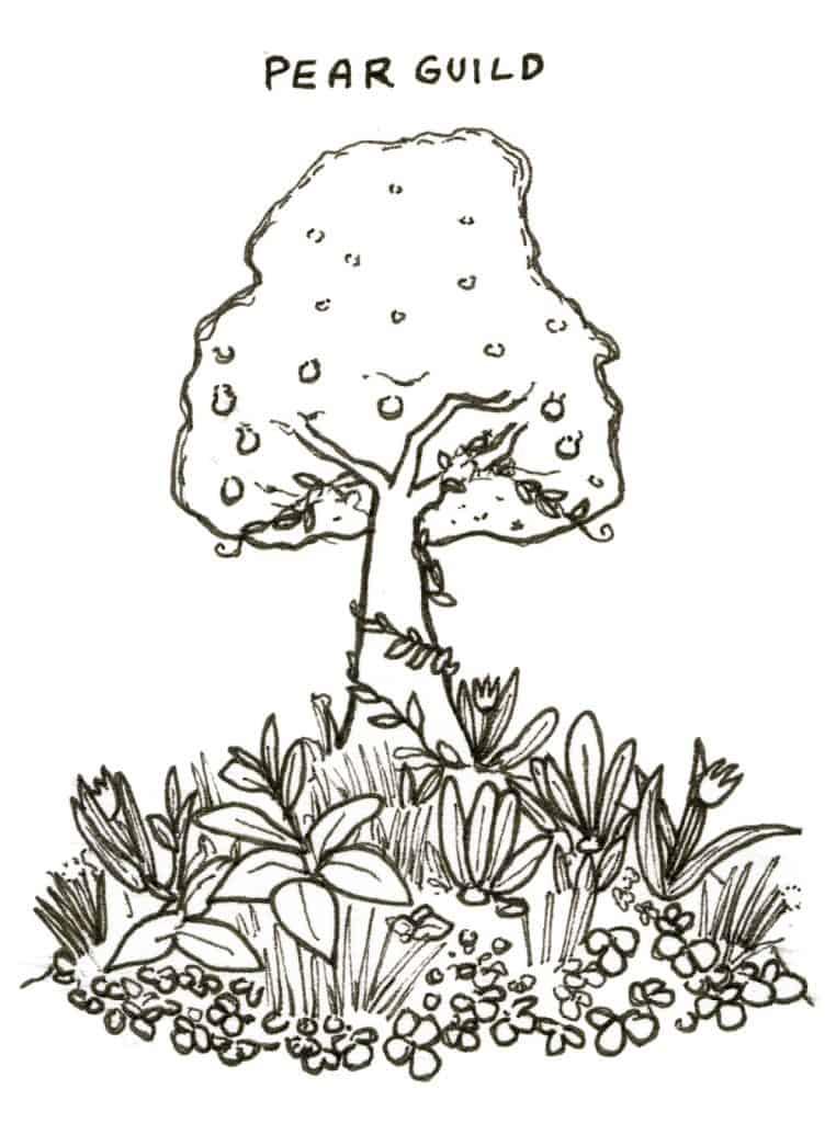 tree guild