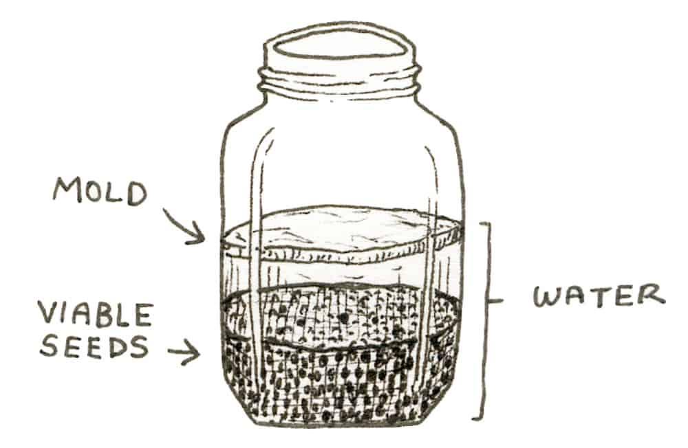 wet processing seed saving