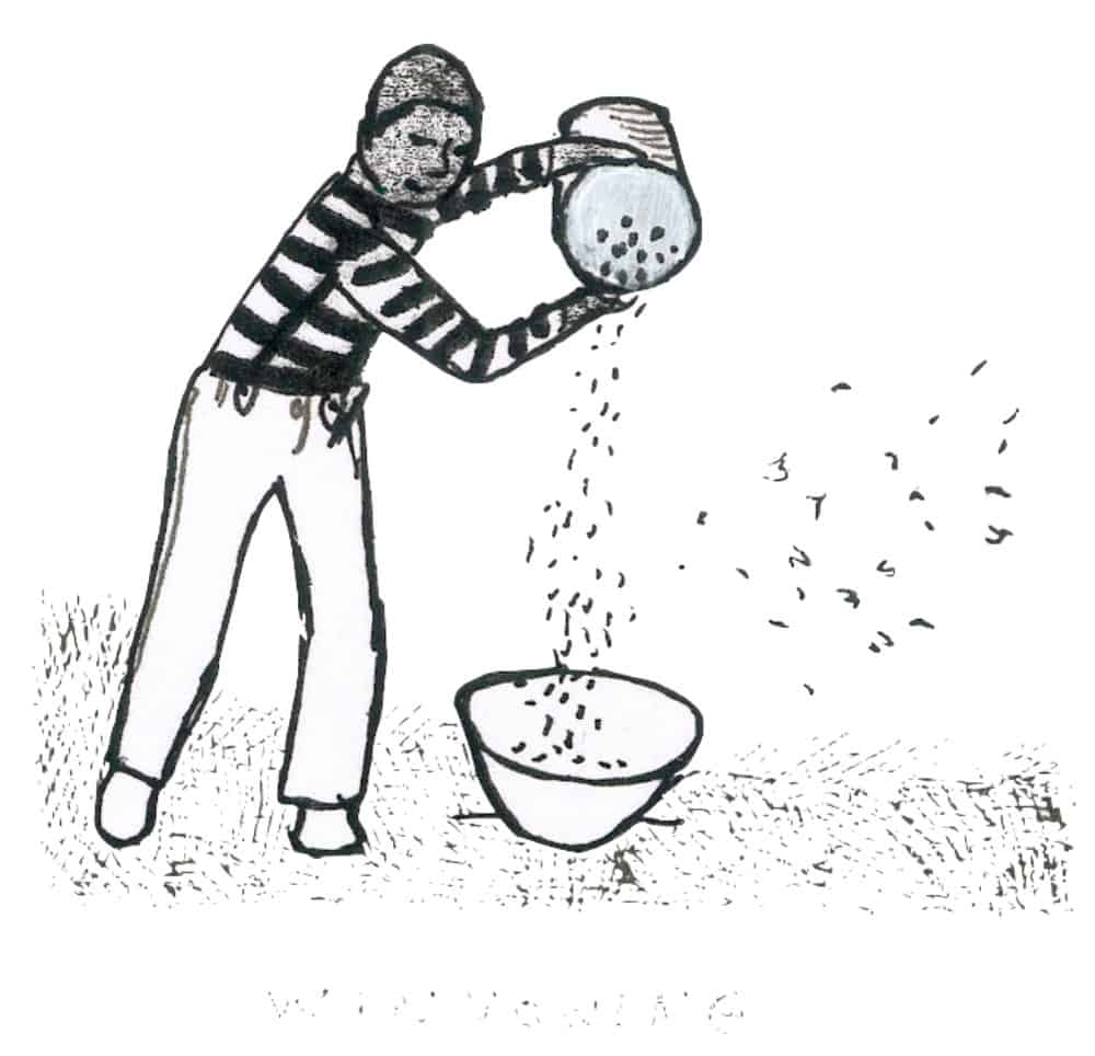 winnowing seeds