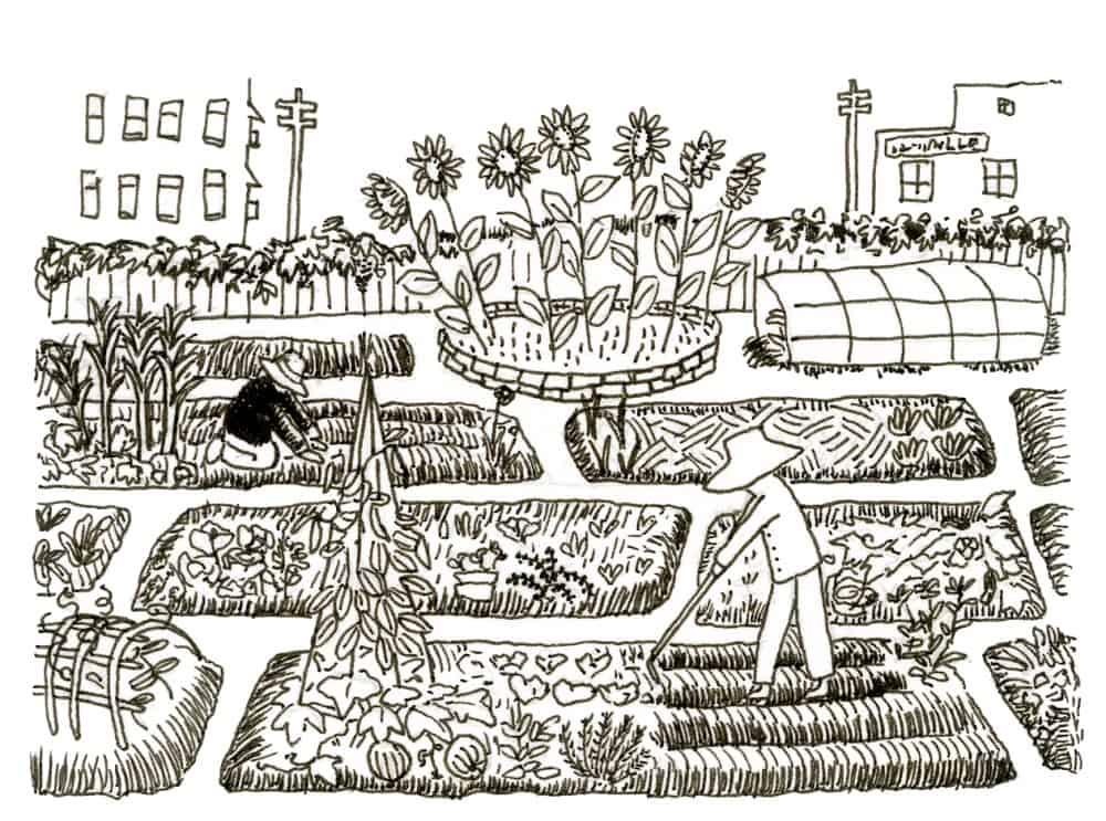 community garden allotment
